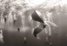 World Press Photo 16 Segundo Premio en la Categoría Naturaleza : Photo © Anuar Patjane de México