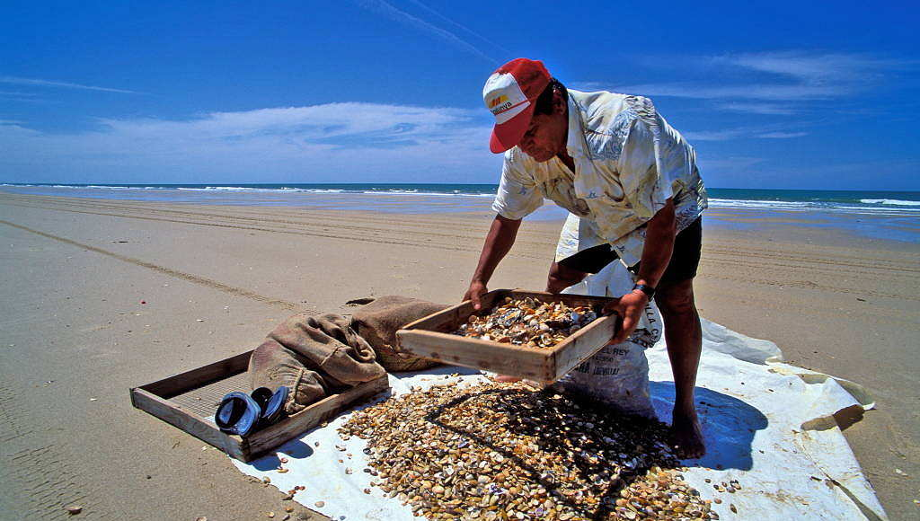 A man using the traditional method of selecting wedge clams (Donax trunculus.) in Doñana National Park, Andalusia, Spain : Photo © Jorge Sierra / WWF-Spain