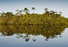 Amazon River, Cuyabeno, Ecuador © Alejandro Polling / WWF-Colombia