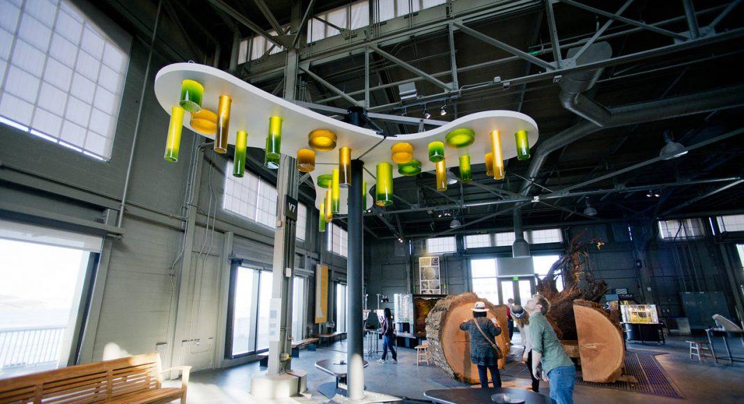 El nuevo Candelabro Algae Chandelier permite a los visitantes bombear oxígeno para nutrir los tanques de bellas y coloridas algas, también conocidas como fitoplancton. Estos organismos microscópicos crecen por millones en la bahía y en el océano, formando nubes verdozas de hasta cientos de kilómetros de anchura: Image by Gayle Laird © Exploratorium, www.exploratorium.edu