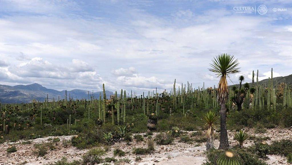 El paisaje natural, constituido por especies y asociaciones vegetales únicas : Foto © Mauricio Marat INAH