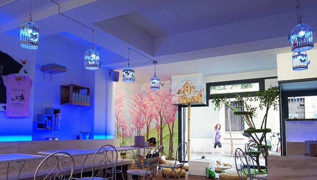 Espai DeGats. Cafetería donde permiten la entrada de gatos : Fotografía cortesía de © MTD