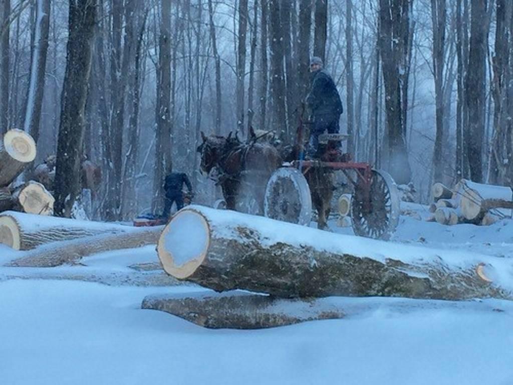 Aserradores Amish utilizan técnicas de recolección sustentable : Photo courtesy of © Madera
