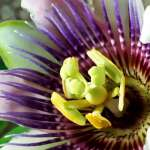 Louie Schwartzberg: Naturaleza. Belleza. Gratitud : Photo courtesy of © TED Conferences LLC